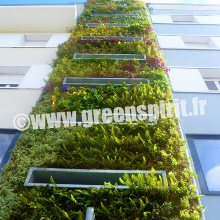 Green Spirit -MUR VÉGETAL VIVANT - CONSTRUCTEUR LA RANCE – GROUPE ACTION LOGEMENT - Saint-Malo (35)